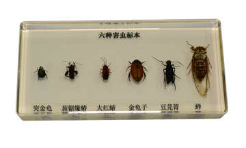 43150 insect specimens
